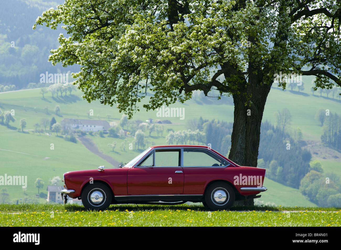 Fiat 124 Coupe in front of apple tree, Lower Austria