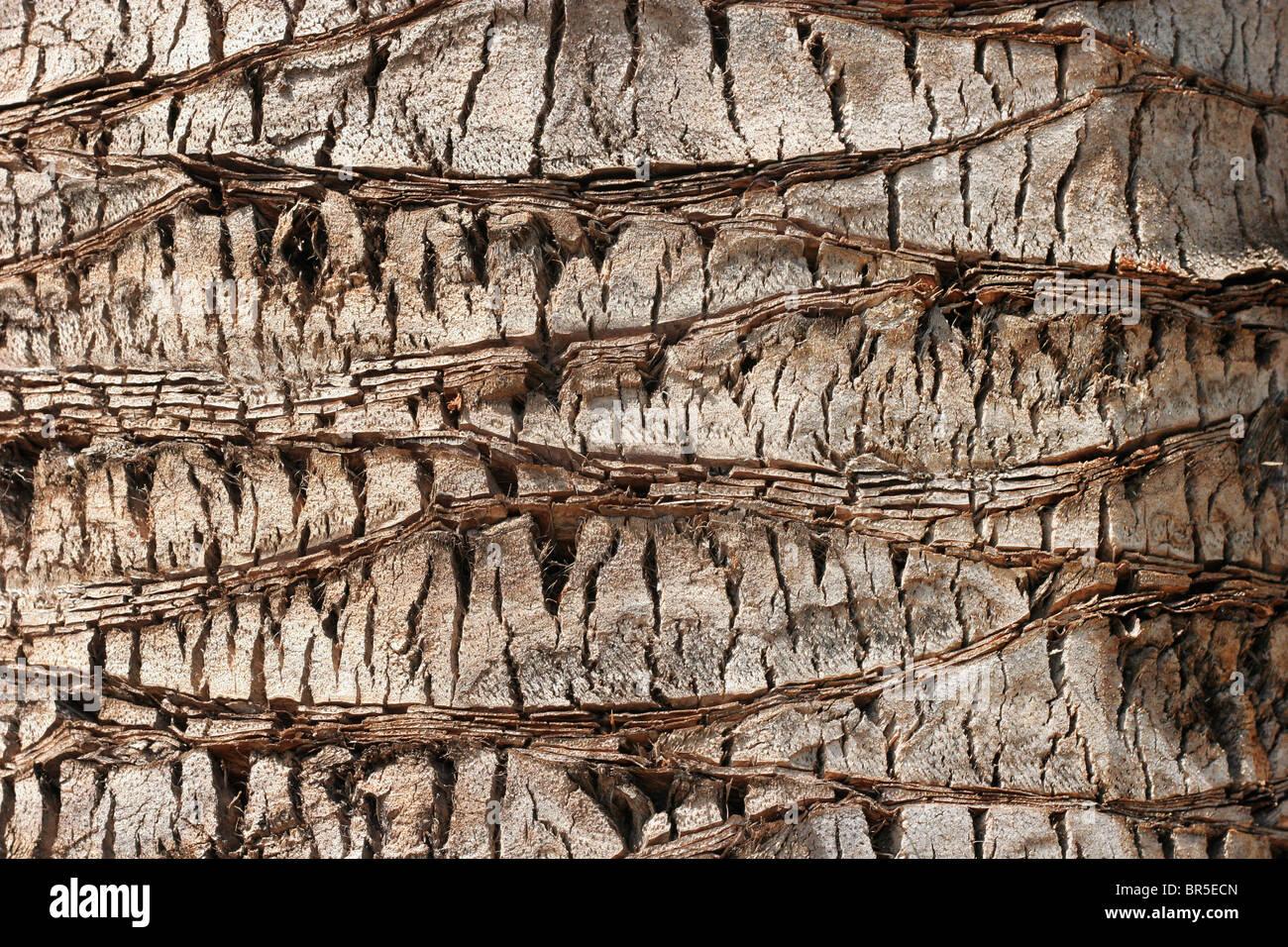 WENDY: The bark