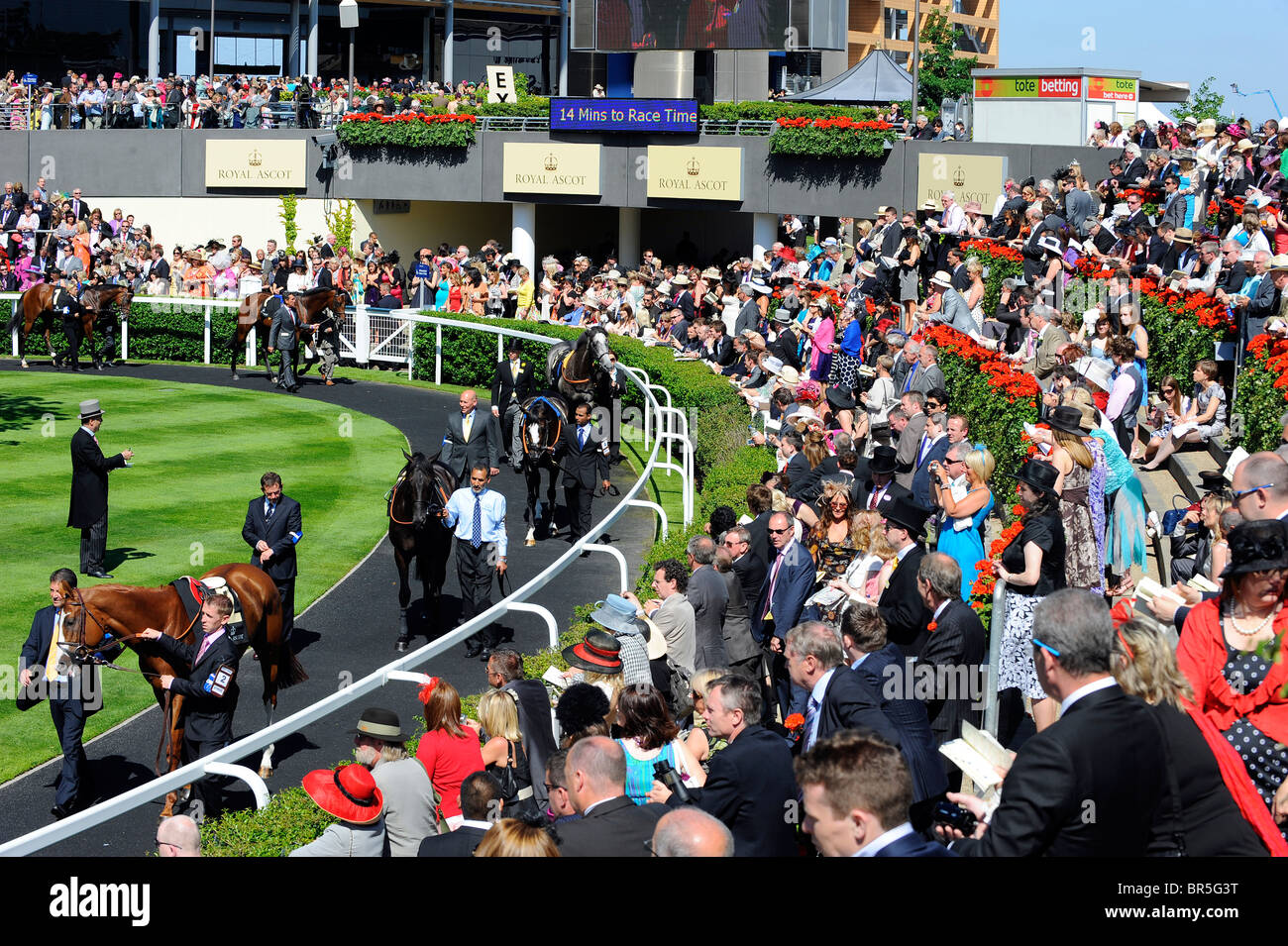View of the parade ring during day two of Royal Ascot 2010 - Stock Image