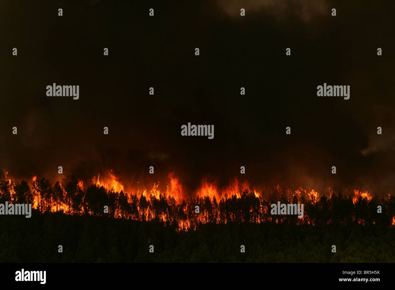 A wildfire rages on in a forest - Stock Image