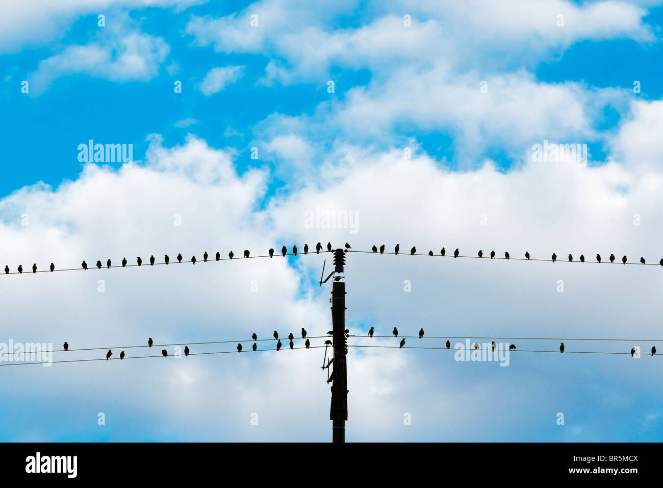 birds sitting on electricity wires - blue sky and white clouds - Stock Image