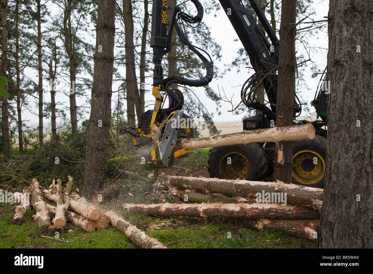 A John Deere Timberjack felling trees in sustainable woodland in Suffolk, UK. he machine chops down trees ready Stock Photo