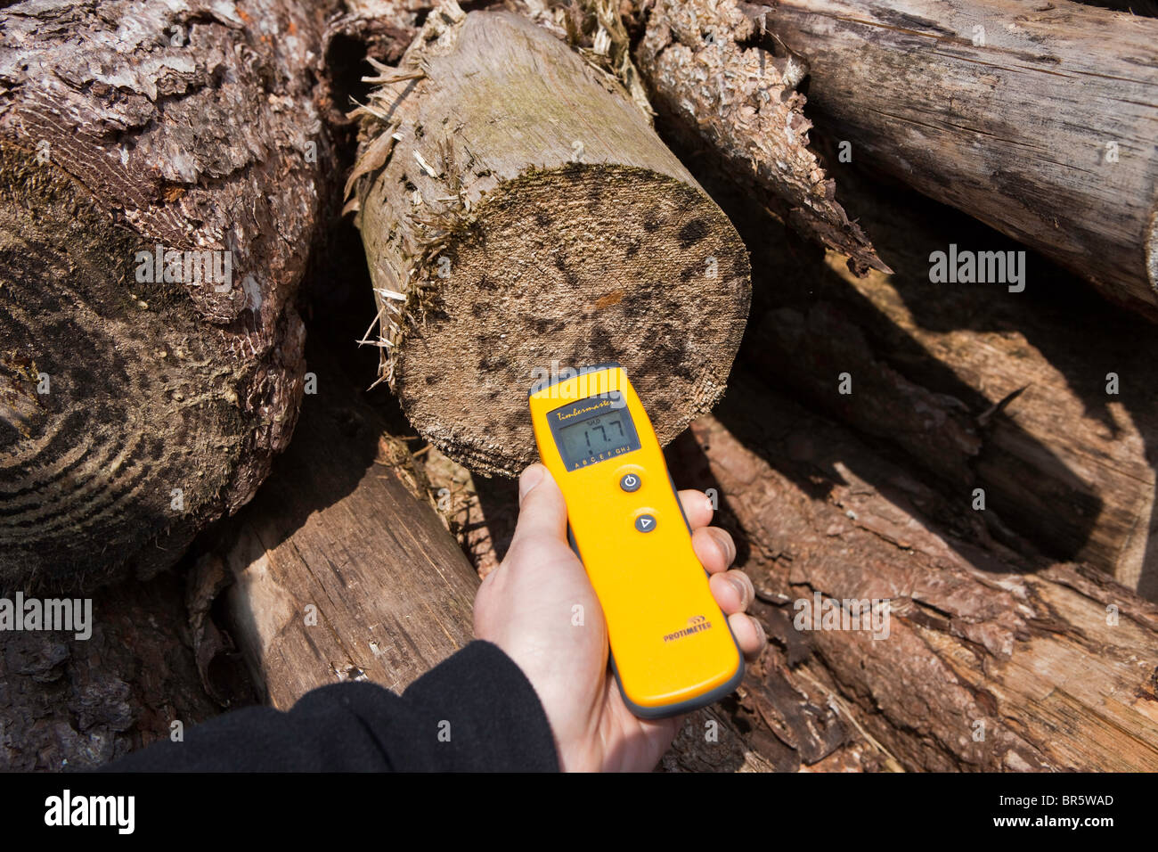 Measuring the moisture content of a log with a Protimeter Moisture Meter to see if it is ready to be chipped. - Stock Image