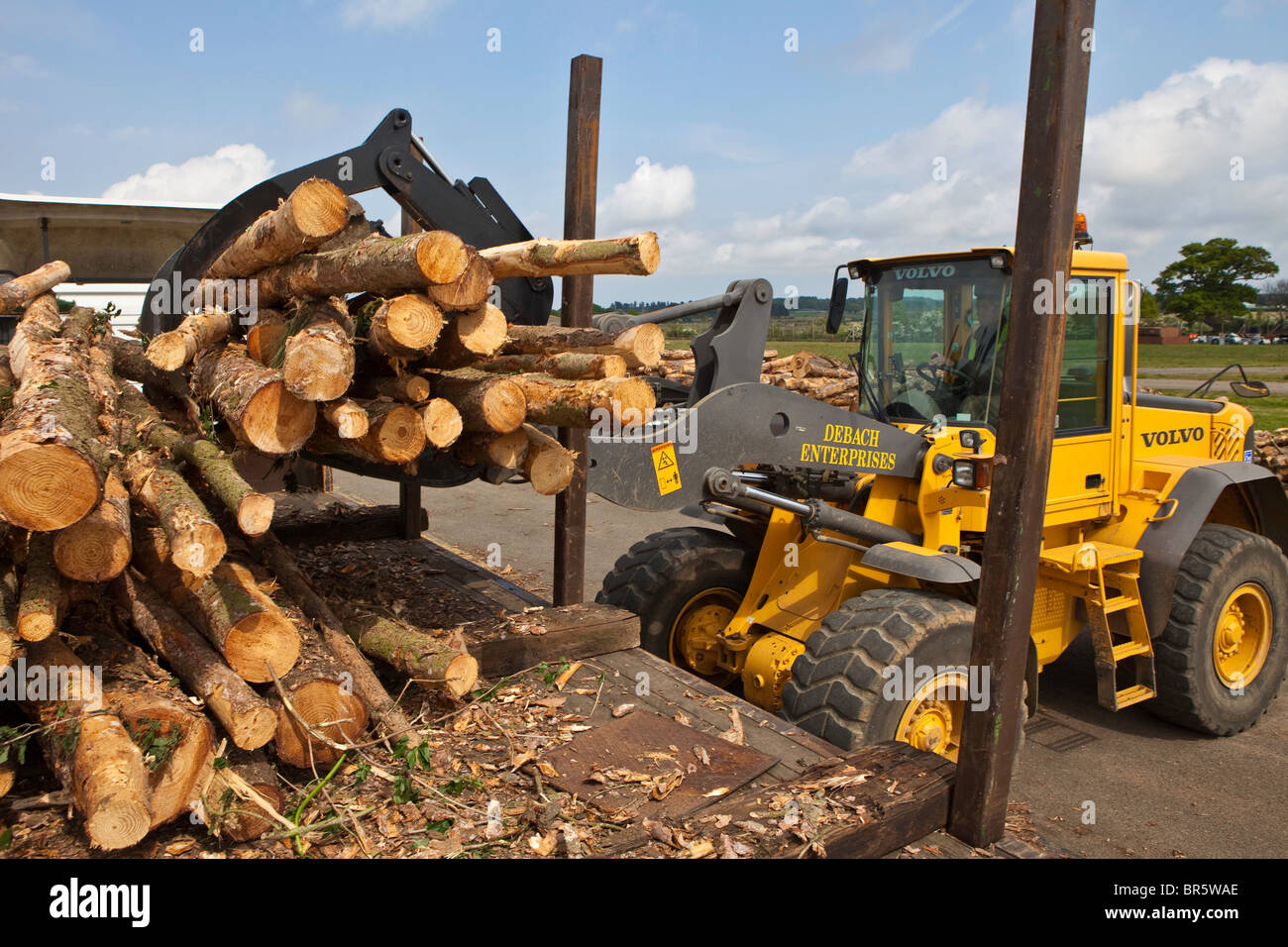 Freshly cut trees from sustainable woodland are stacked to dry out before being turned into chippings. - Stock Image