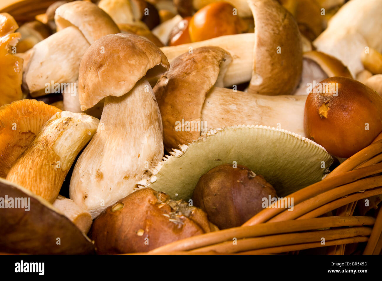 Basket with edible mushrooms. Fungus. - Stock Image