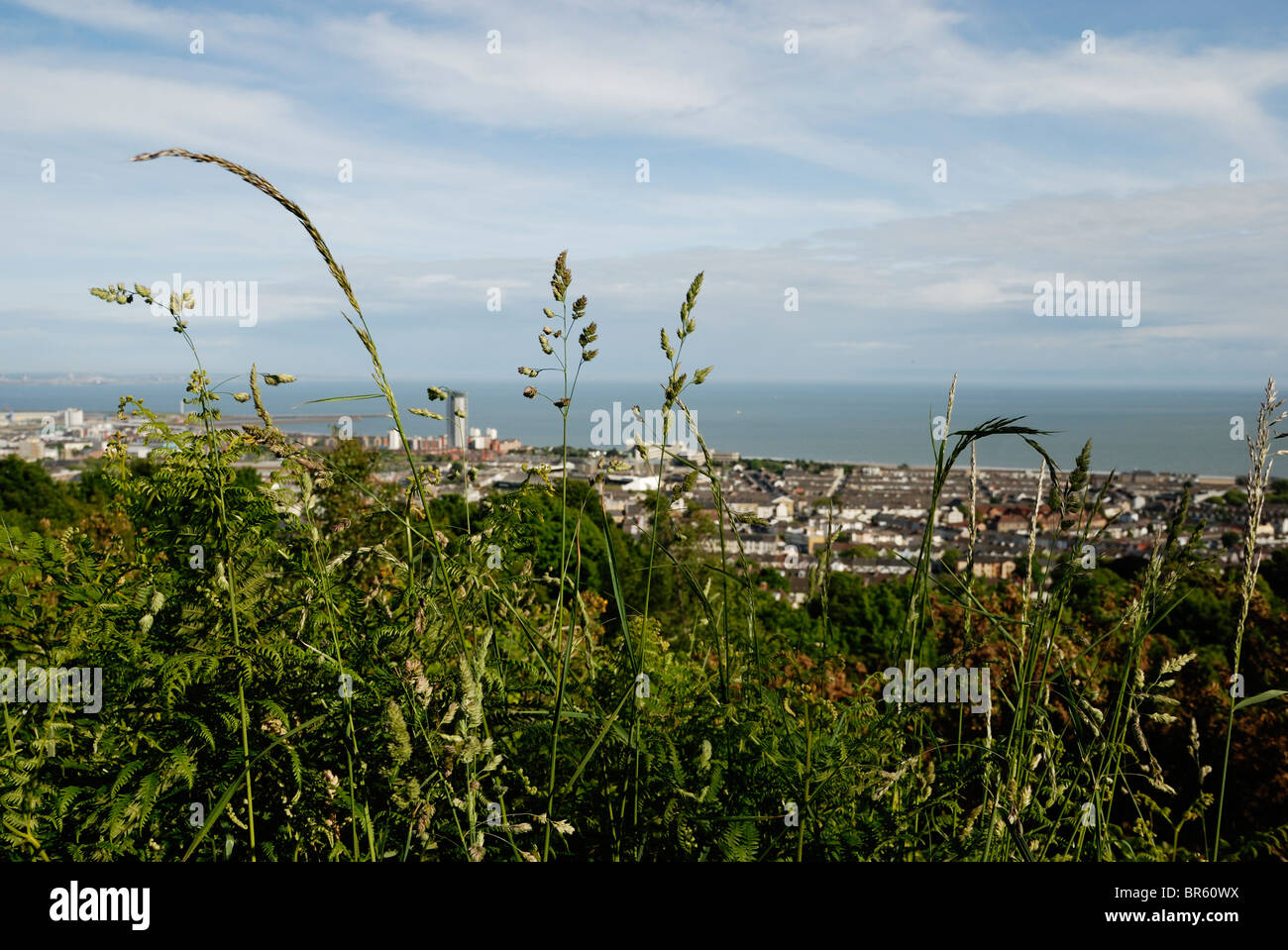 View of the City of Swansea taken from Rosehill Community Park with wild grasses in the foreground, Wales. - Stock Image