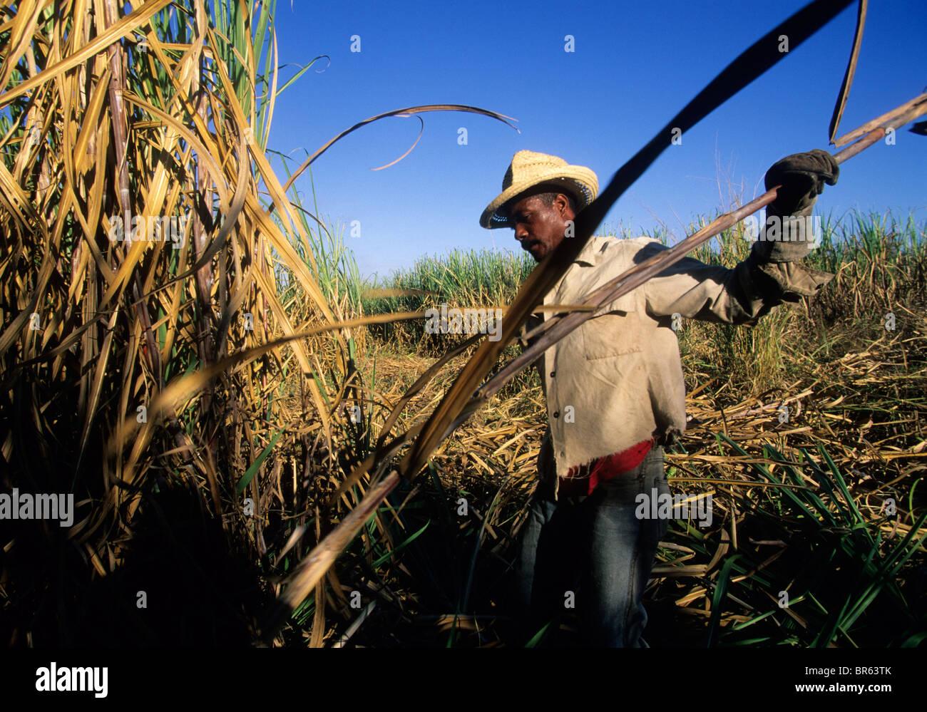 Worker cuts sugar cane in the Valle de los Ingenios Cuba - Stock Image