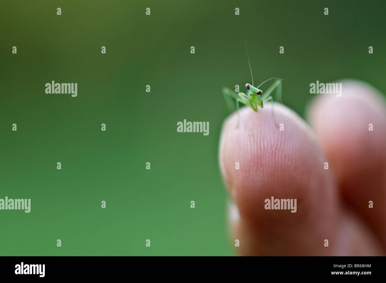 Tiny Animal in Big Hand - Stock Image