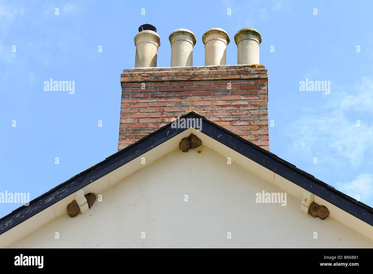 House martin nesting colony on the gable end of a house - Stock Image