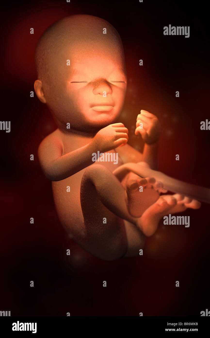 This 3D medical image depicts a fetus at (21) weeks. By this point in development, hair is present. - Stock Image