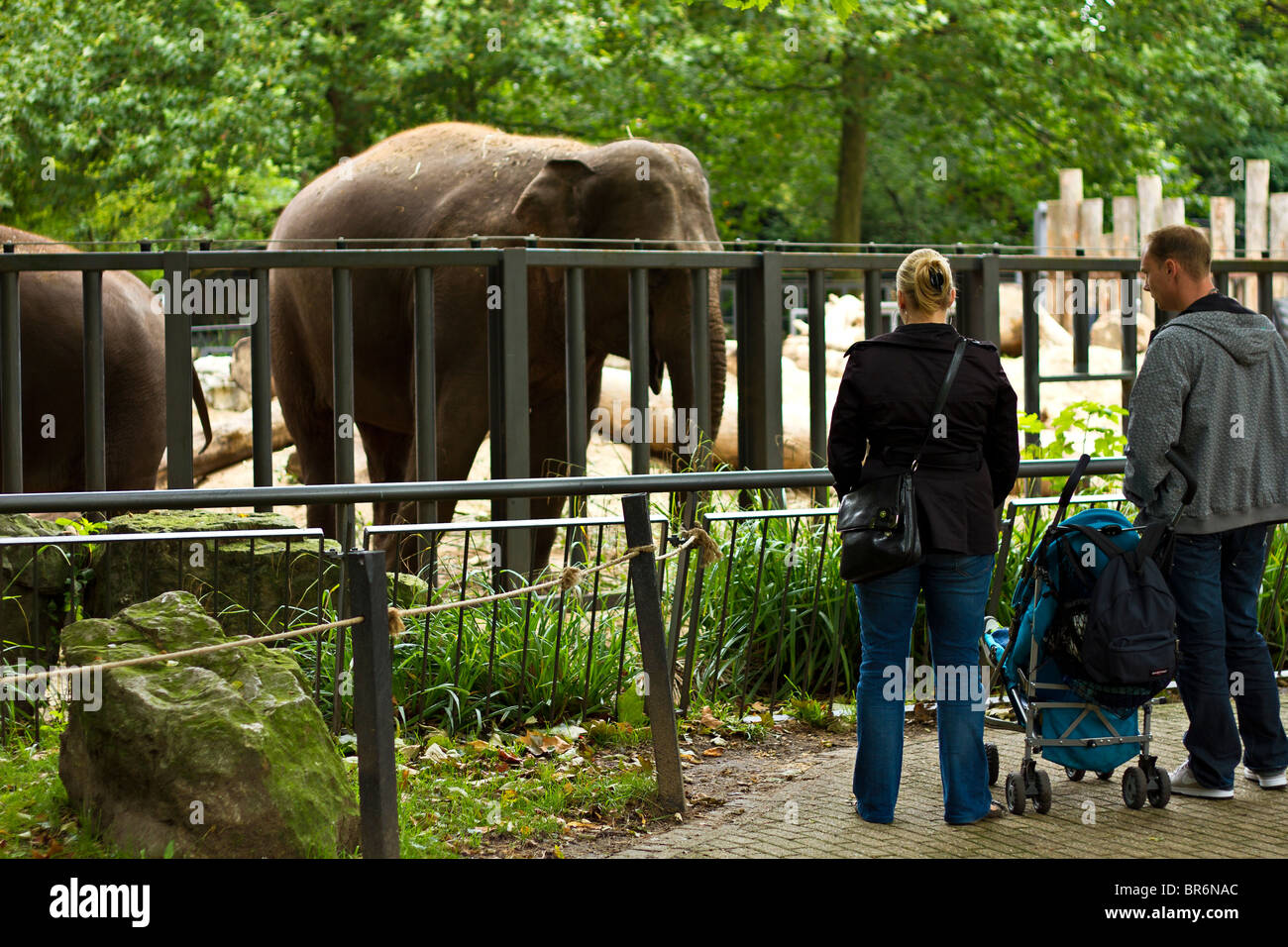 Family visiting the elephants at Artis Zoo, Amsterdam, Holland - Stock Image