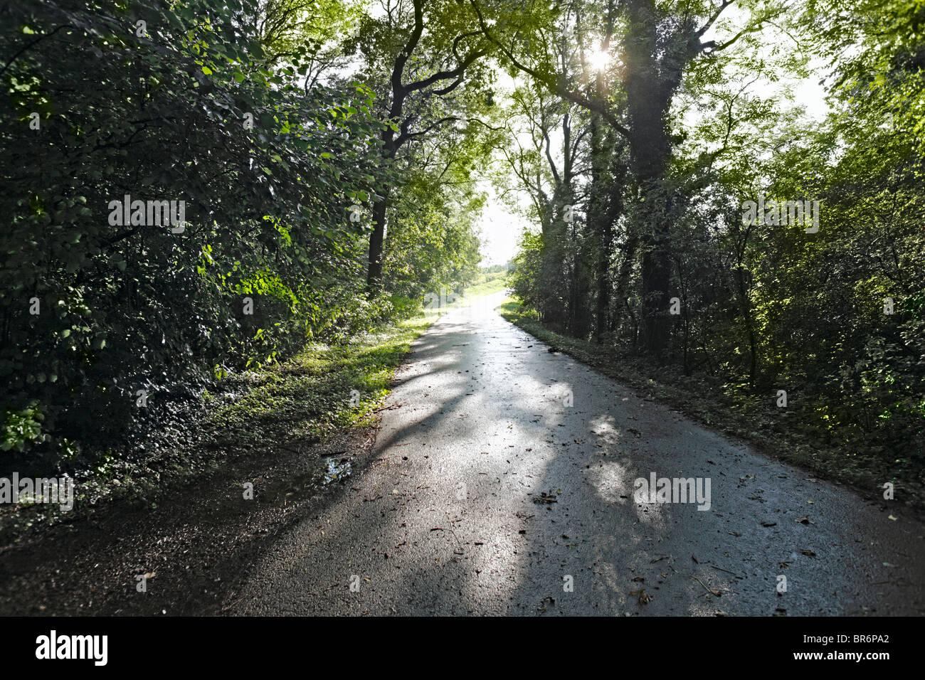 Sonnenstrahlen brechen auf einen Waldweg zwischen den Baeumen hervor Stock Photo