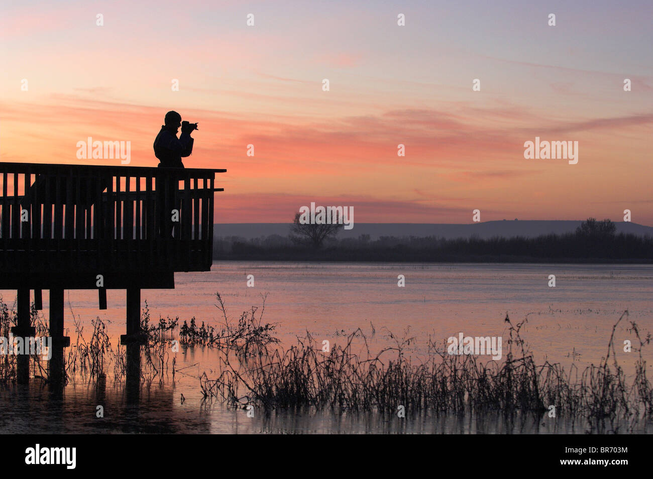 Person bird watching at dawn, Bosque del Apache National Wildlife Refuge, New Mexico, USA - Stock Image