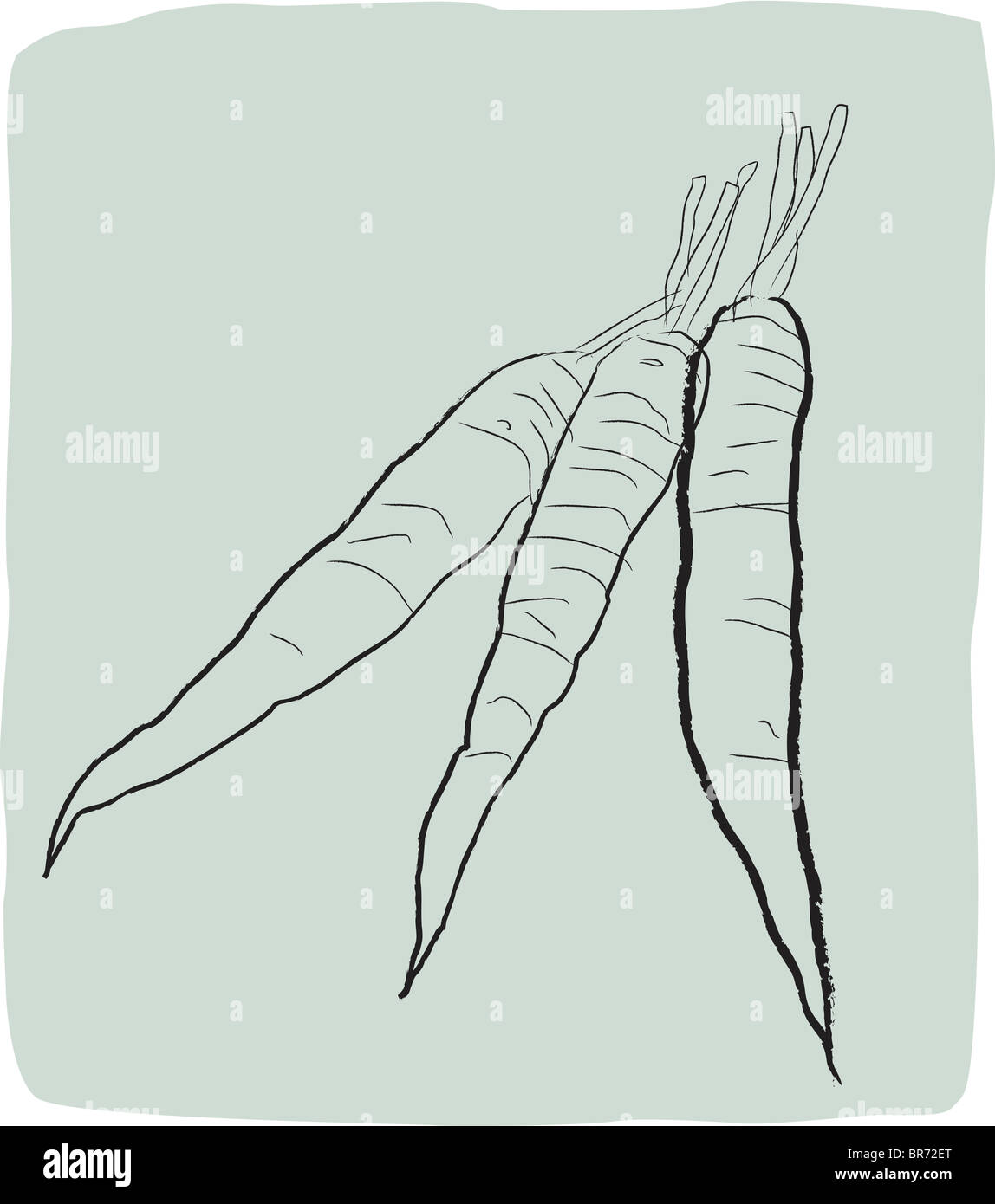 A textured line drawing of carrots - Stock Image