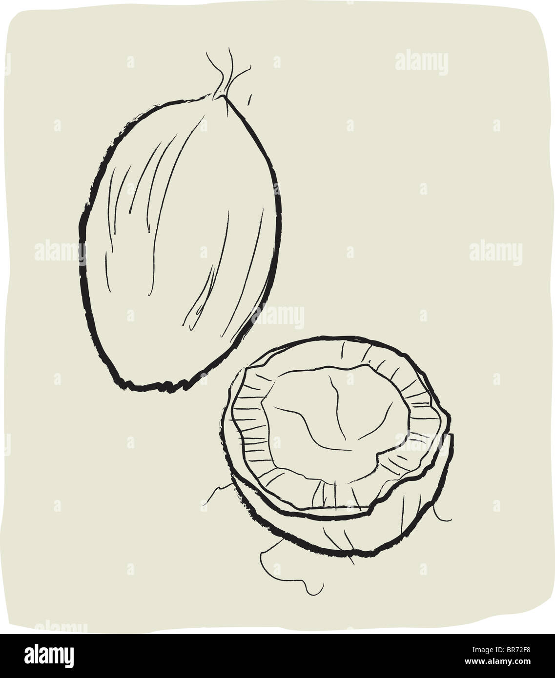 A textured line drawing of coconut - Stock Image