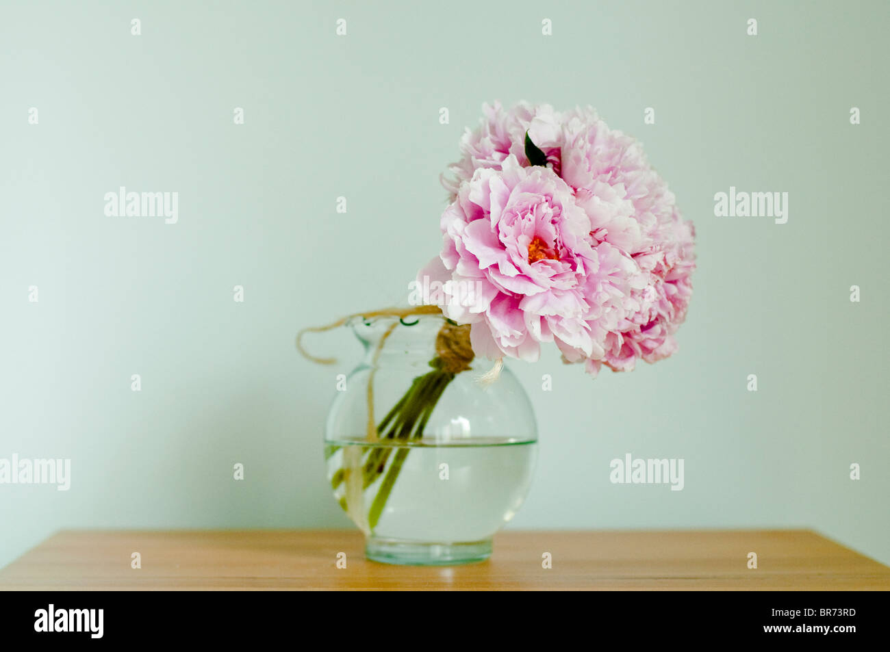 A bouquet of pink peonies in a vase on a table. - Stock Image