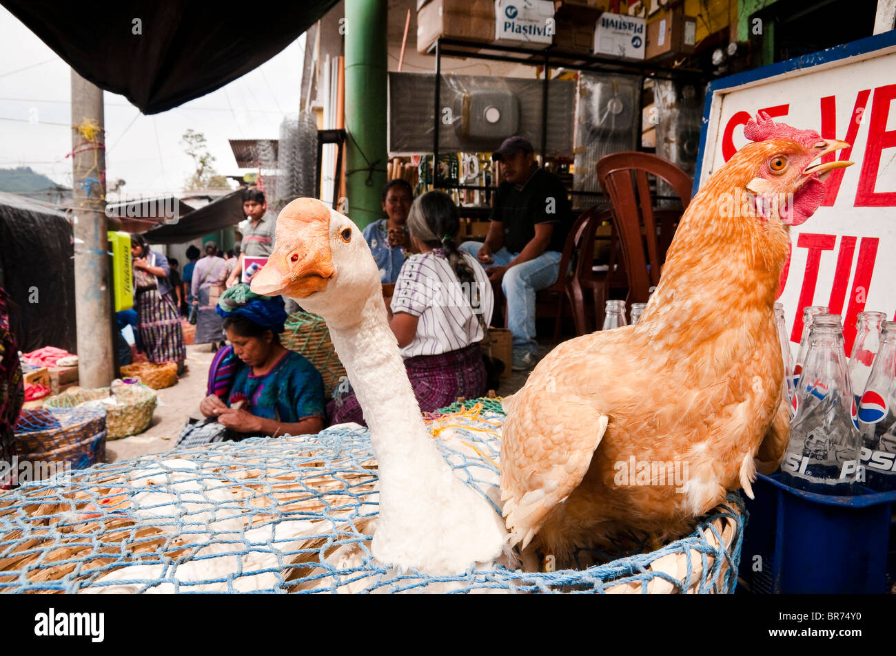 The traditional Solola Market 'The Chicken Point', Solola, Guatemala. - Stock Image