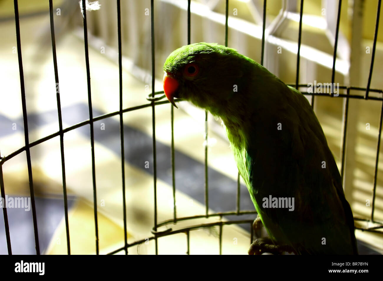 Parrot in Shaddow Stock Photo