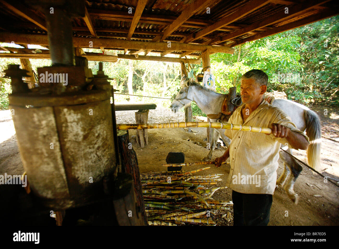 A man mills sugarcane outside of Boquete Panama - Stock Image