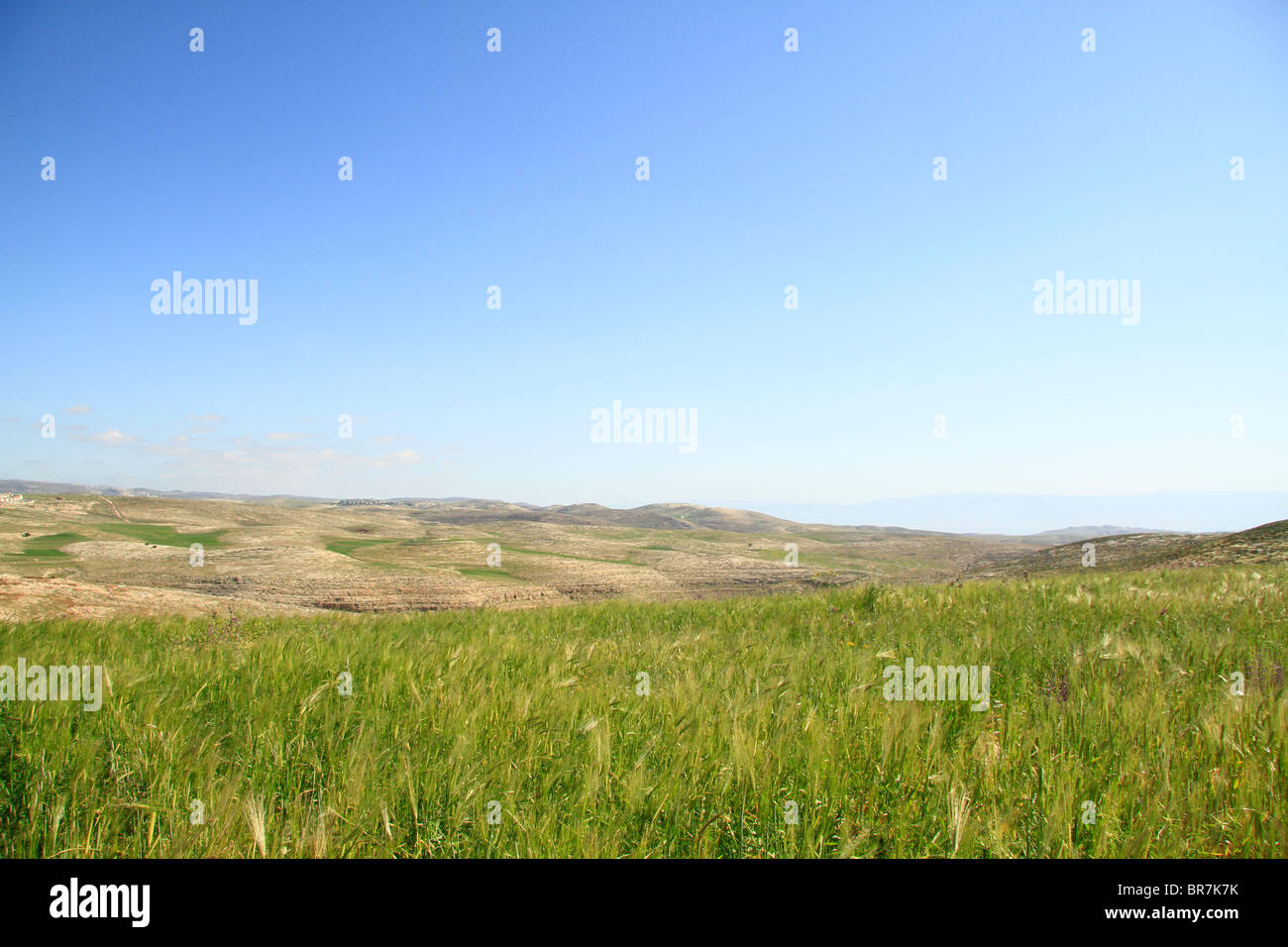 Landscape nearTell el-Ful, site of biblical Gibeah - Stock Image