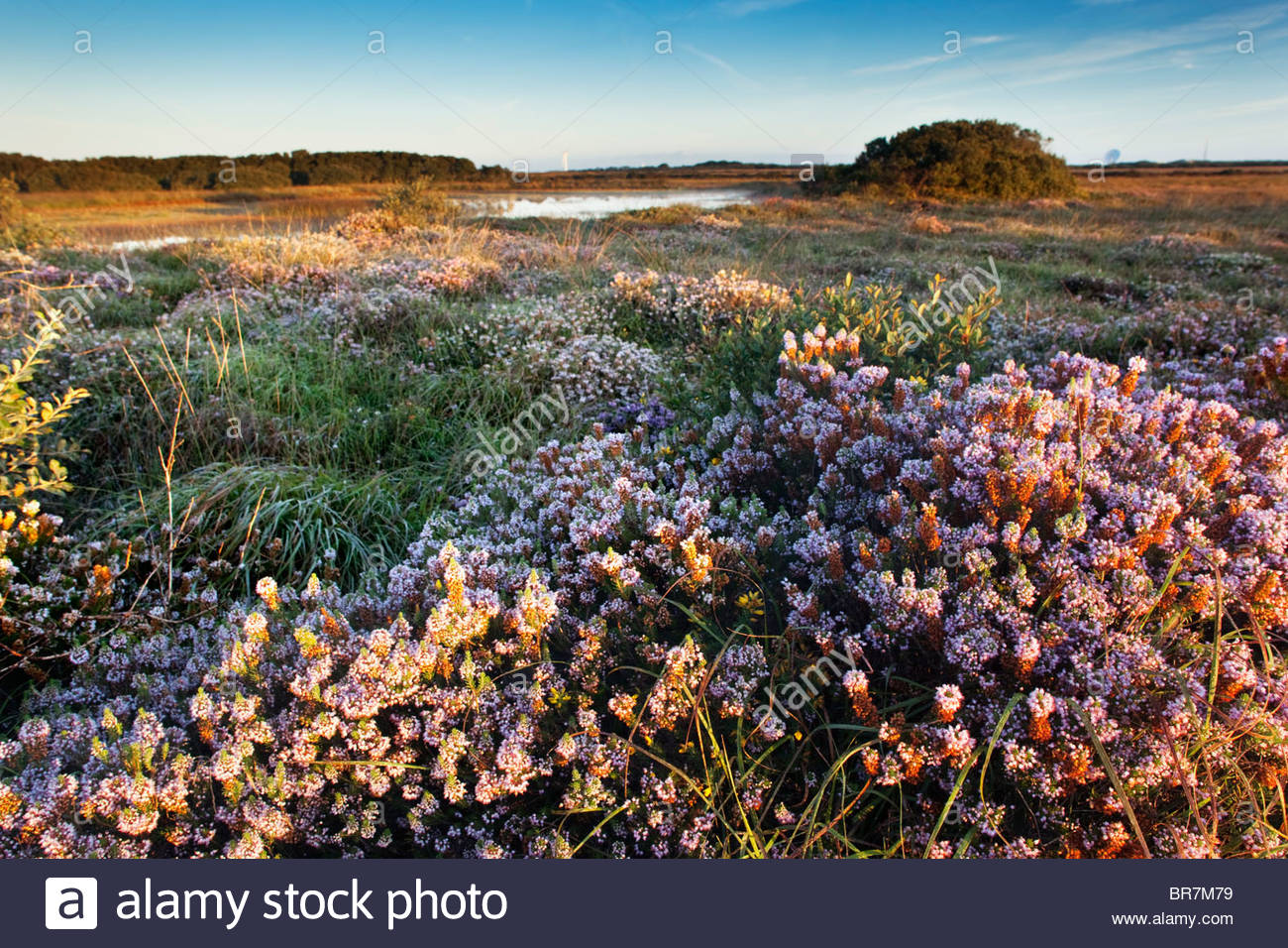 Croft Pascoe National Nature Reserve; Cornwall Stock Photo