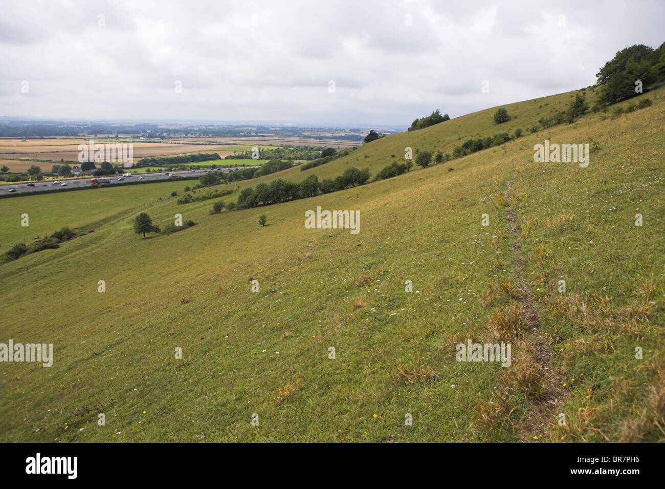 Chalk downland grassland nature reserve at Aston Rowant, Oxfordshire in August. - Stock Image