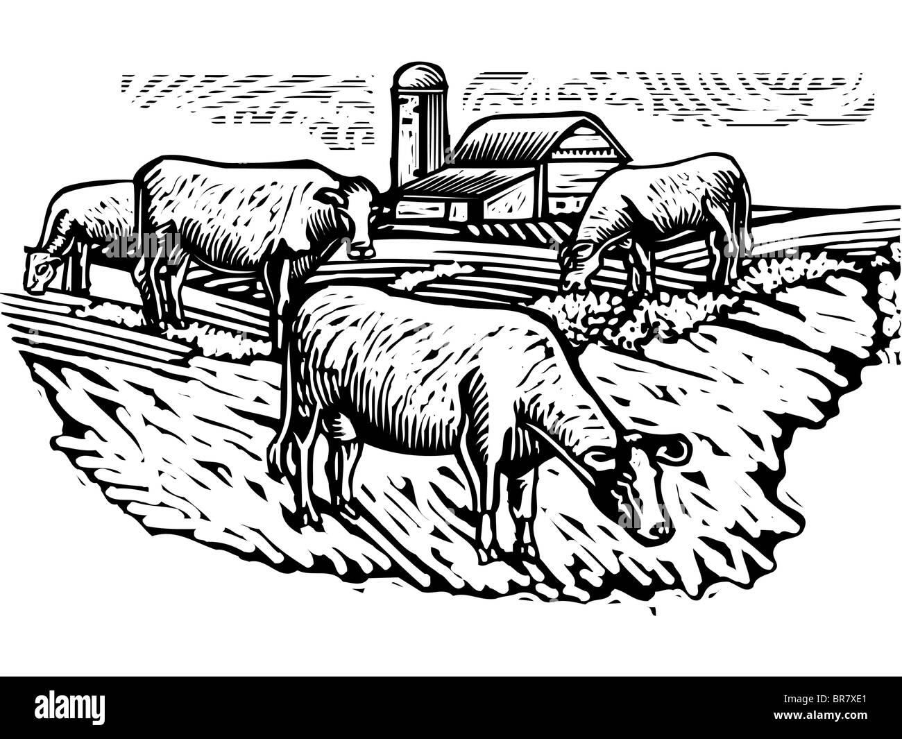Black and white illustration of cows grazing on a pasture with a building in the background - Stock Image