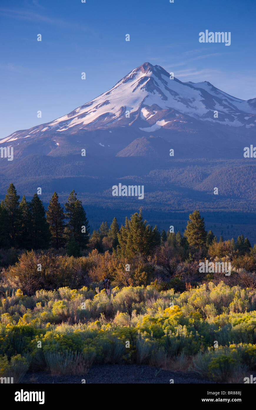 Mount Shasta California part of the Cascade Mountain Range - Stock Image