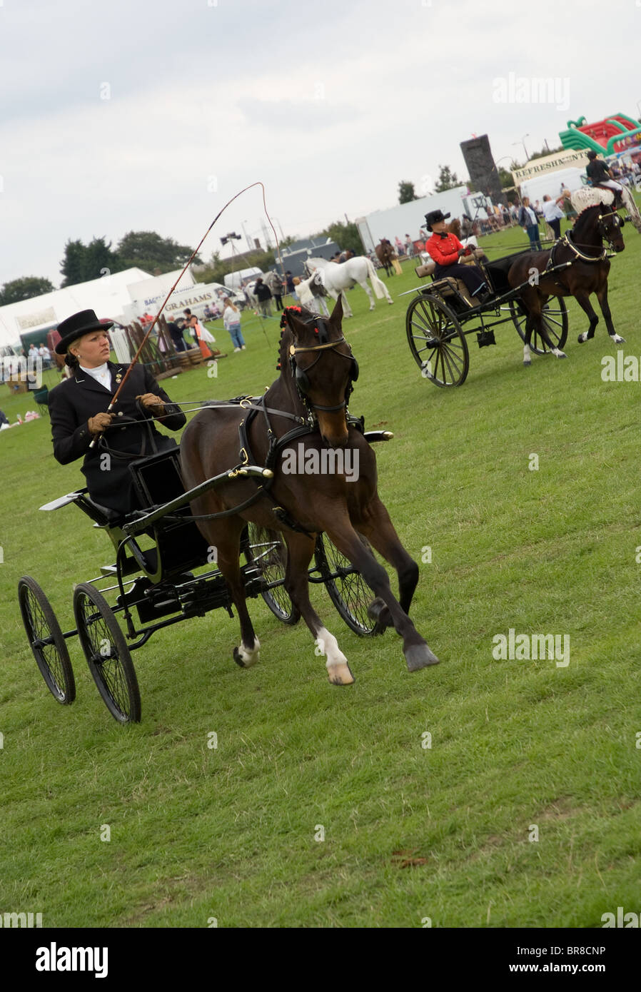 hackney carriage ponies at the orsett county show - Stock Image