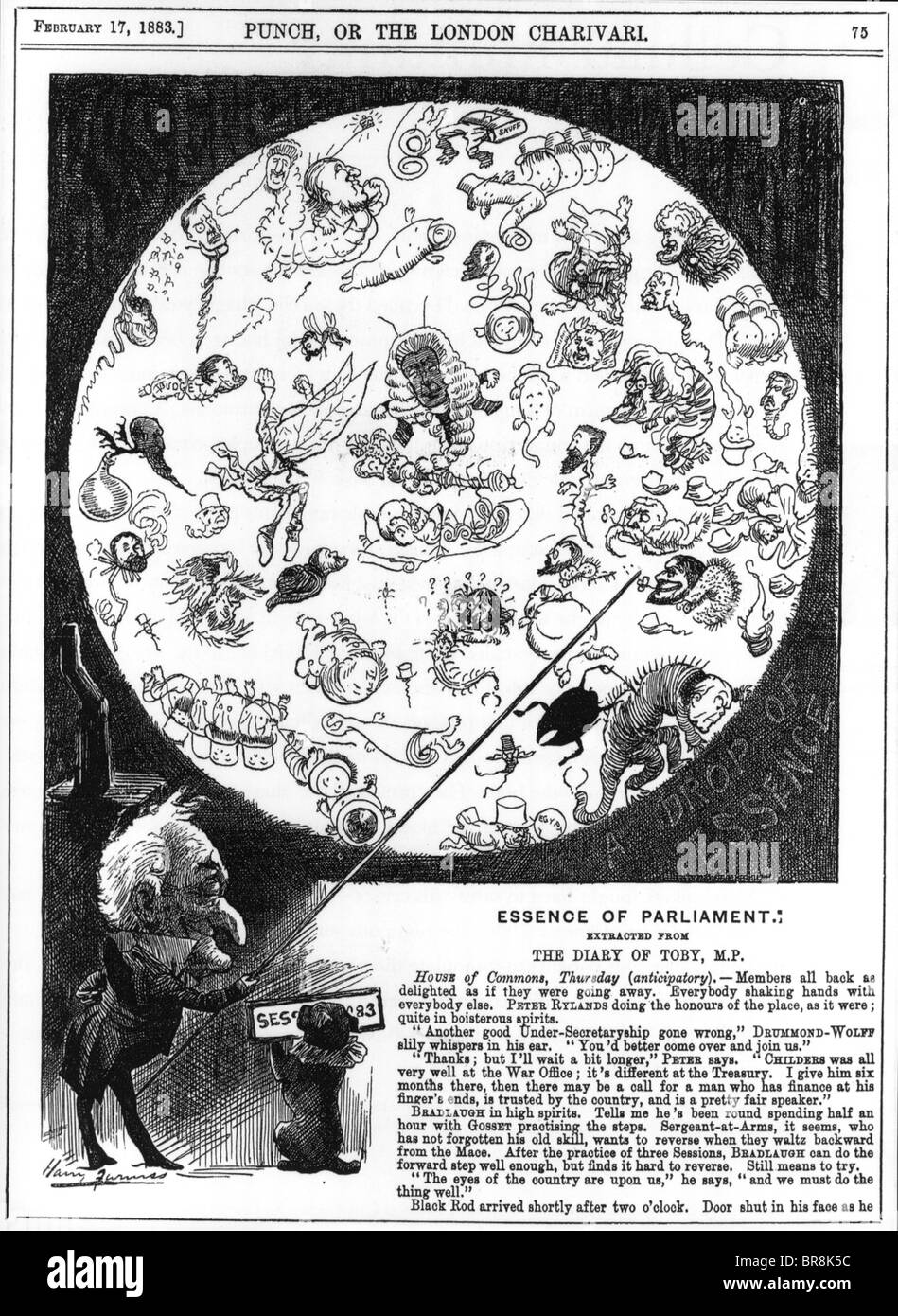 THE ESSENCE OF PARLIAMENT  Punch cartoon of 1883 shows politicians as microscopic life forms - Stock Image