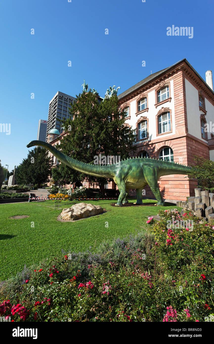 Naturmuseum Senckenberg, Frankfurt am Main, Hesse, Germany - Stock Image
