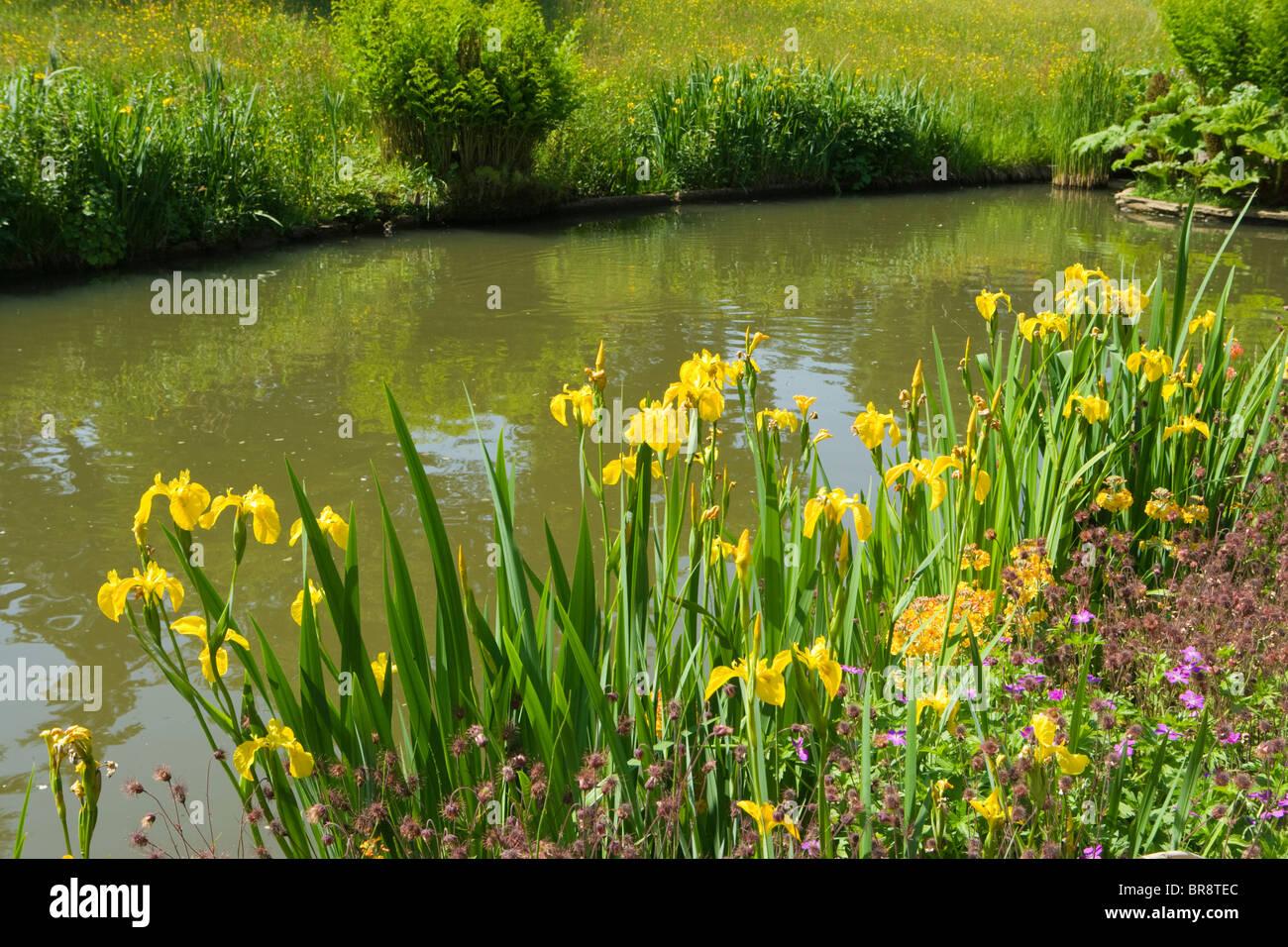 The Rock Garden, Wisley RHS Garden, Surrey, UK. Yellow irises. - Stock Image