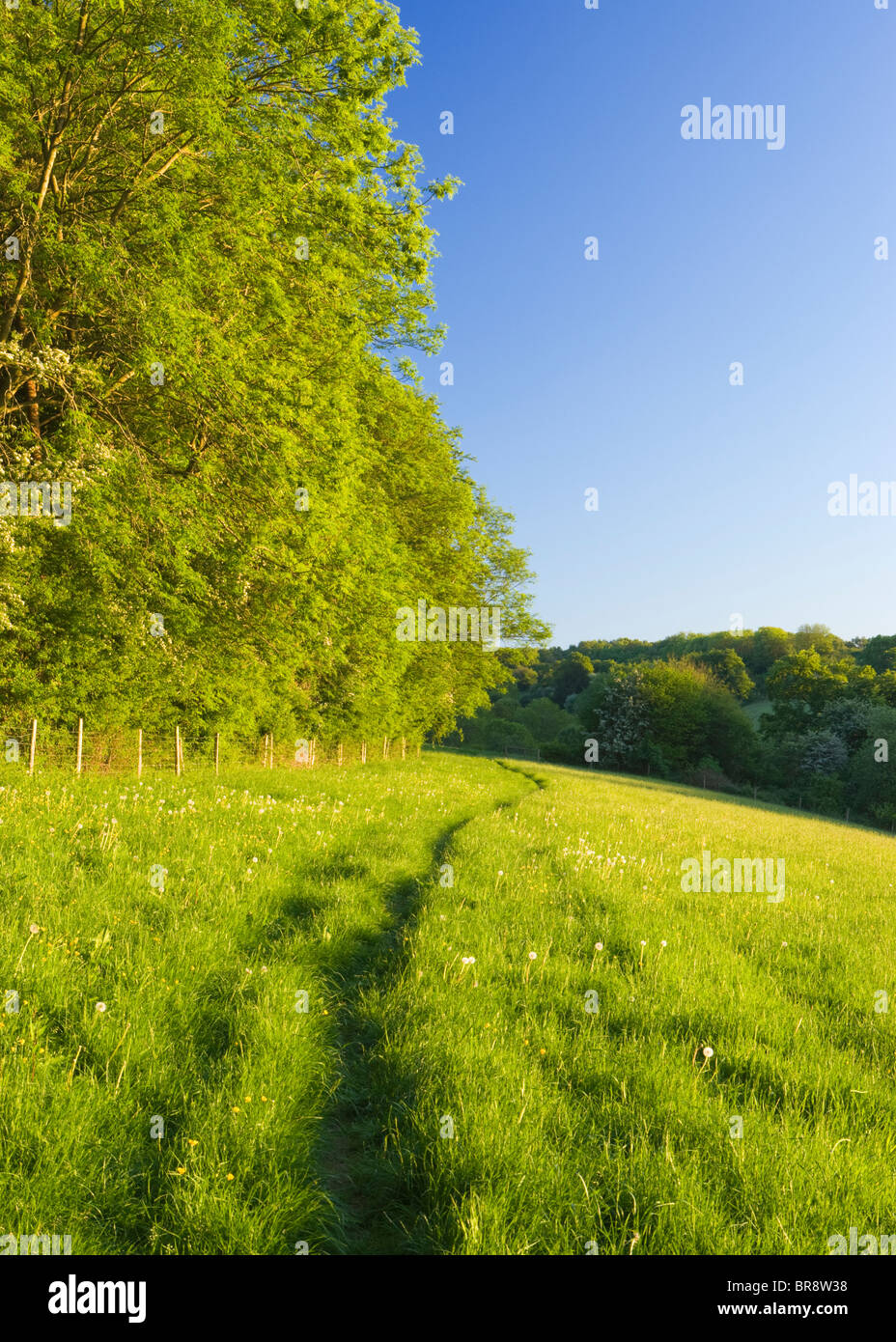 Path through field, North Downs at Ranmore, near Dorking, Surrey, UK - Stock Image