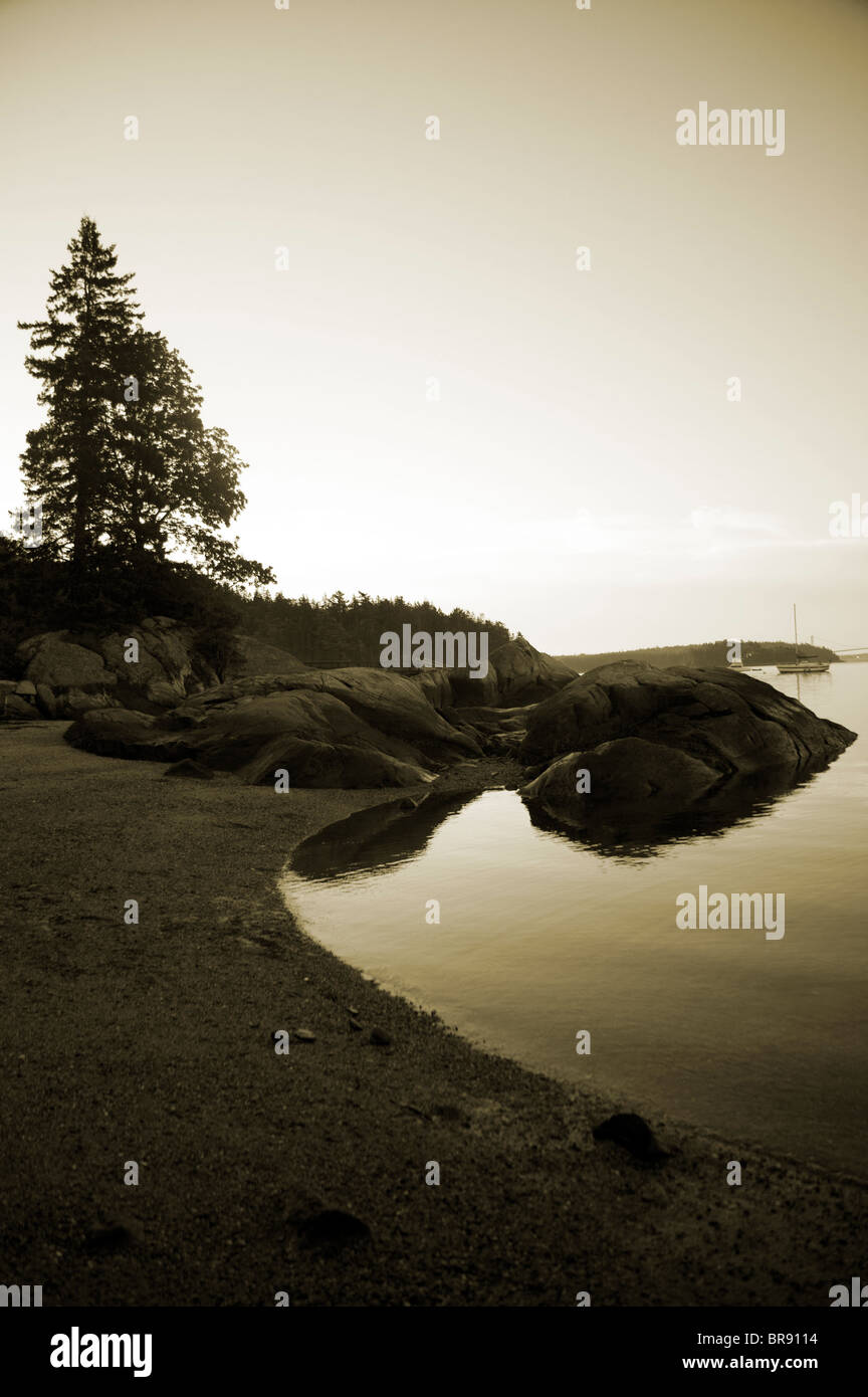 Sepia image of lake or body of water and lone pine tree. - Stock Image