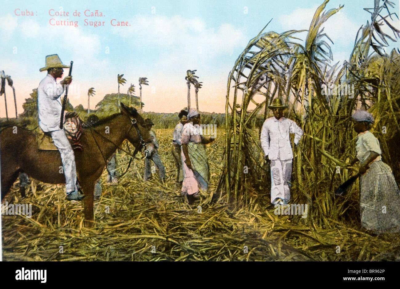 Cuba Cuban Cutting Sugar Cane Painting 1930 - Stock Image
