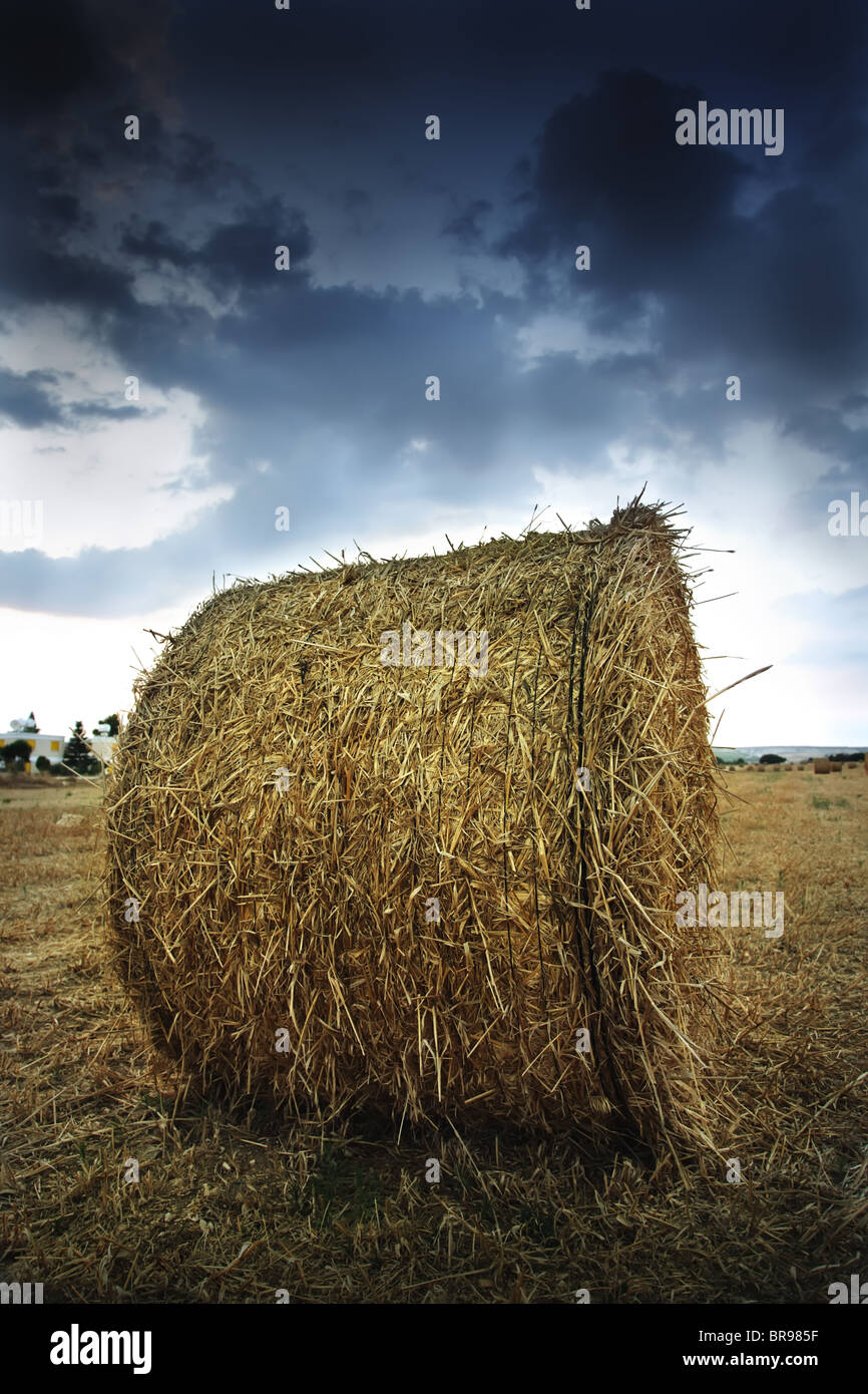Evening rural landscape. Straw baleclose-up against the dramatic sky. Cyprus. - Stock Image
