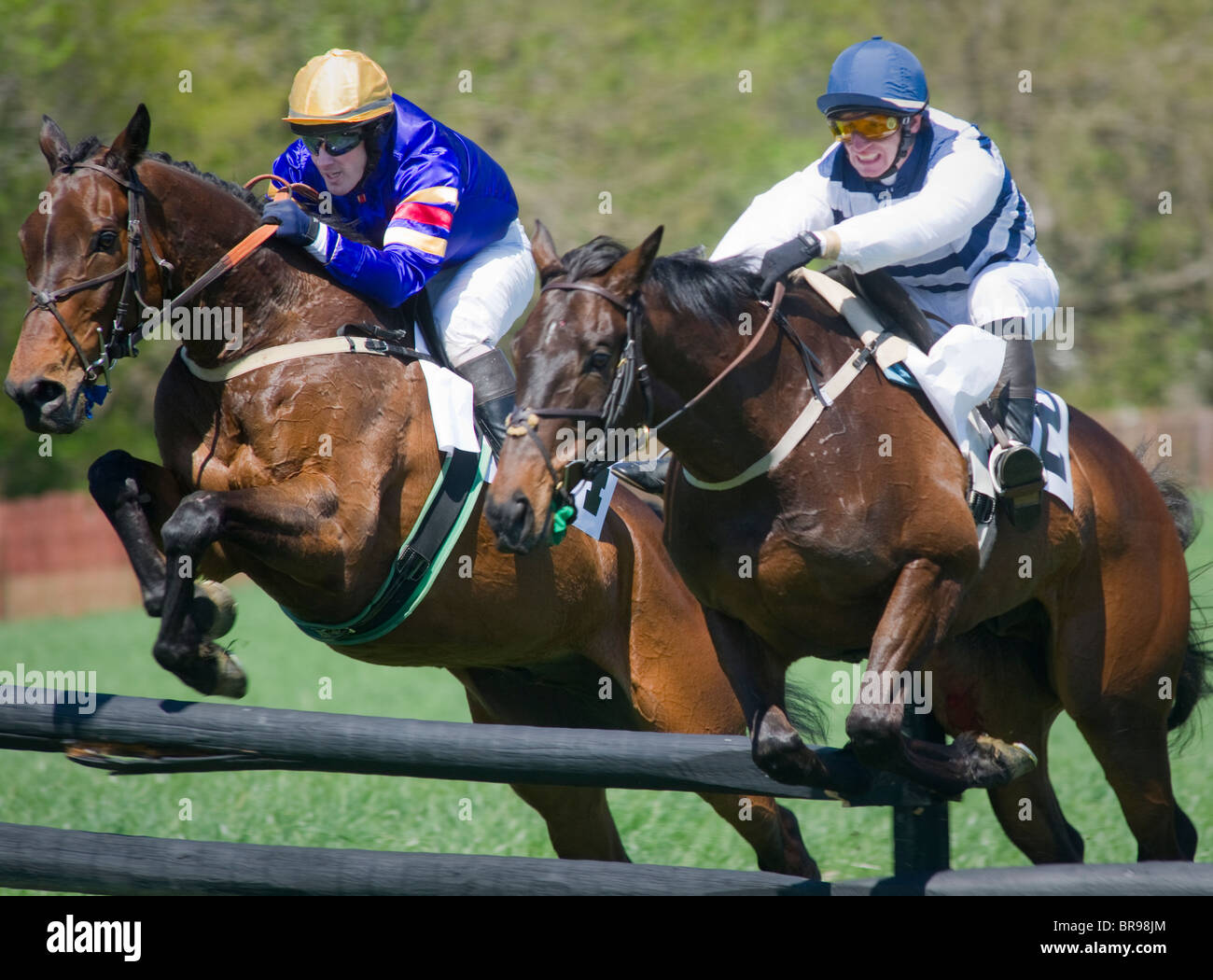 Horses jumping over fence - Manor Races, Maryland Stock Photo
