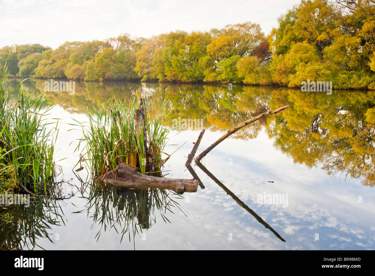 Early Morning Reflections on the Mersey River, Latrobe, Tasmania - Stock Image