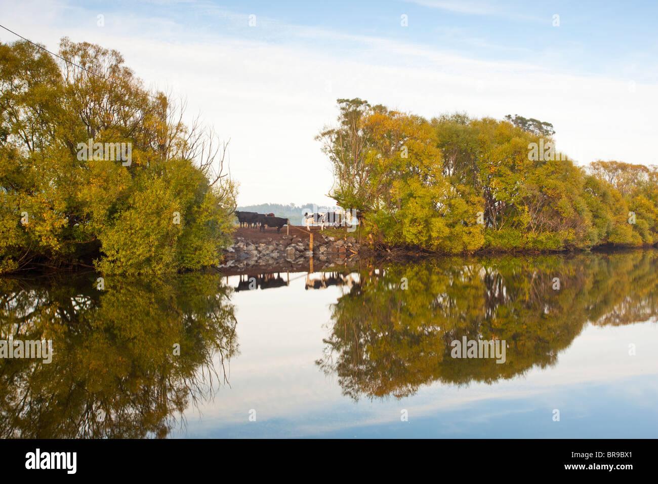Early morning on the Mersey River, Latrobe, Devonport, Tasmania - Stock Image