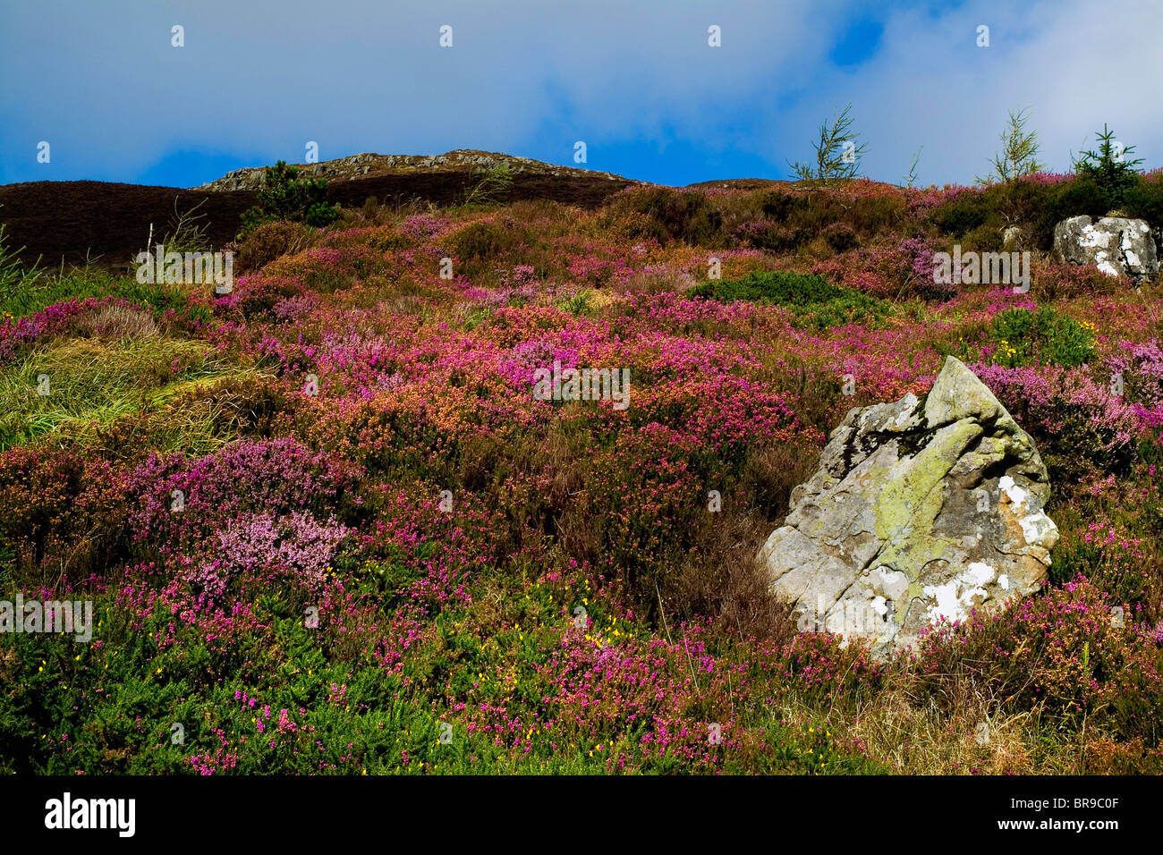 Slieve Gullion, Co. Armagh, Ireland Stock Photo