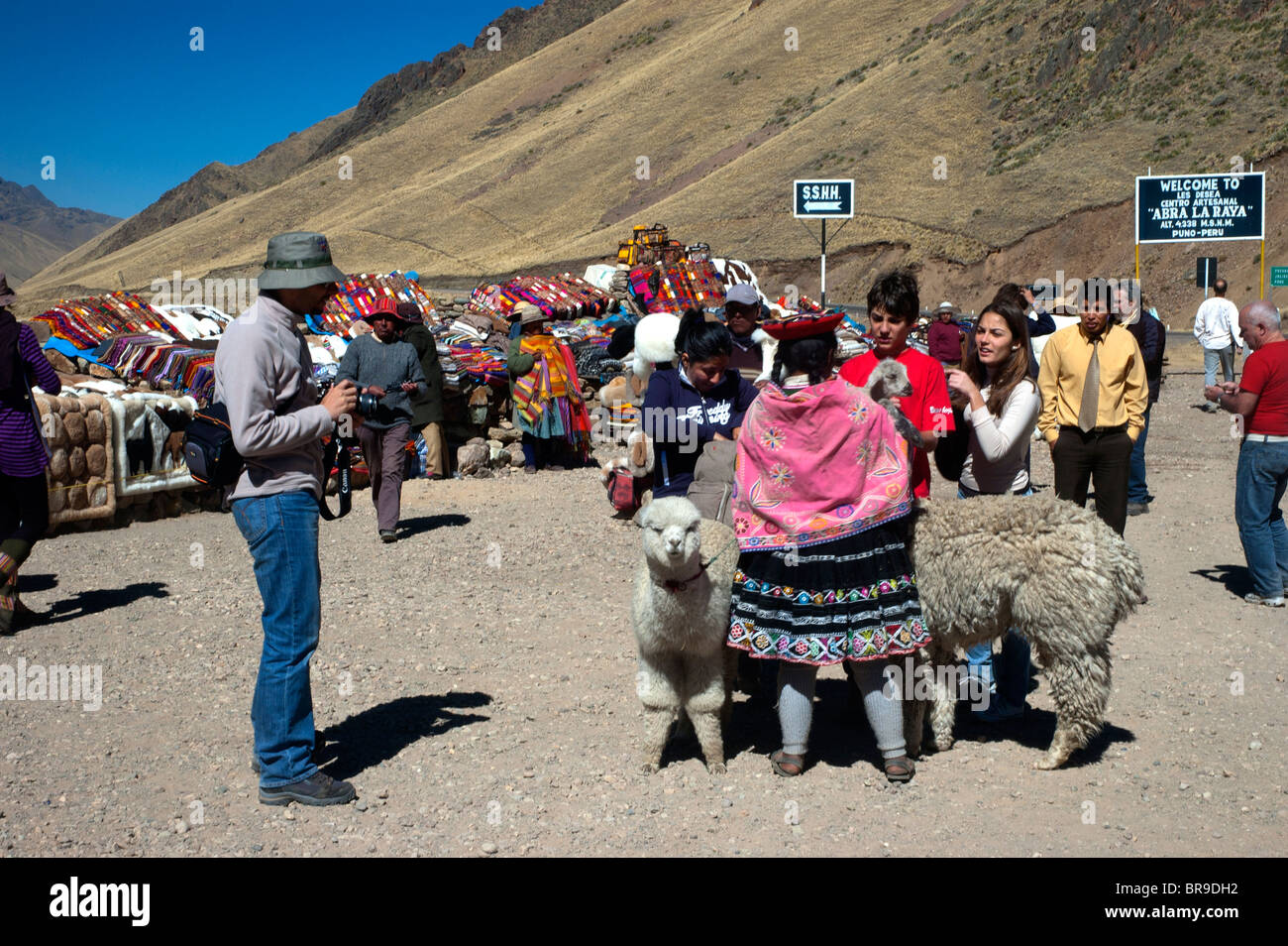 Tourists get photographed with alpacas and locals at La Raya Pass, the highest altitude on the road from Cusco to - Stock Image