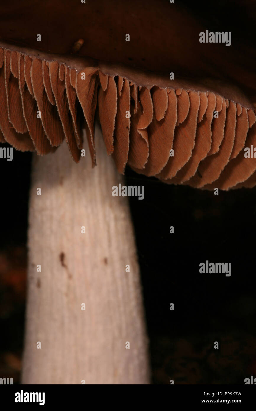 Fungi in the forest at Evje in Rygge, southeastern Norway. - Stock Image