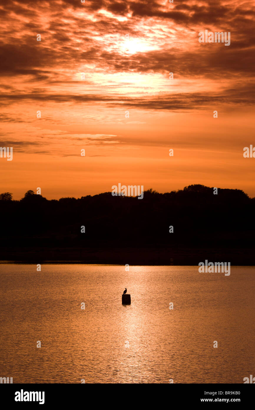 A bird enjoys the last rays of an Autumn sunset sitting on a buoy in the middle of Bartley Green Reservoir, Birmingham. - Stock Image