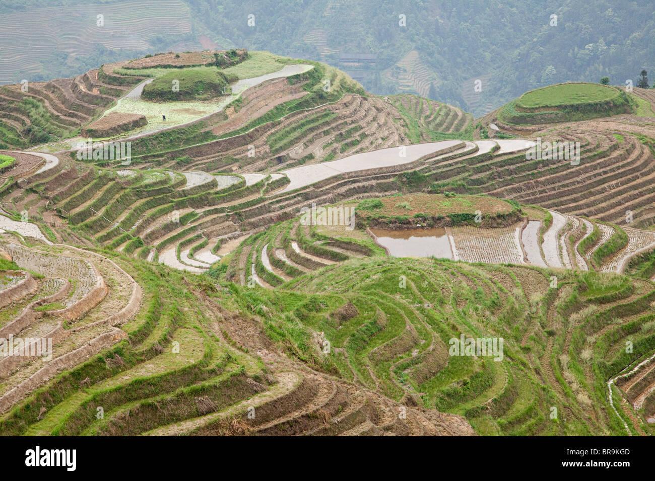 China, guangxi, longsheng, dragon's backbone rice terraces - Stock Image
