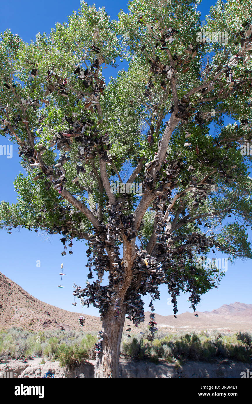Shoe tree - Hundreds of shoes dangling from a cottonwood tree, an oddity on the side of the road on Highway 50 in - Stock Image