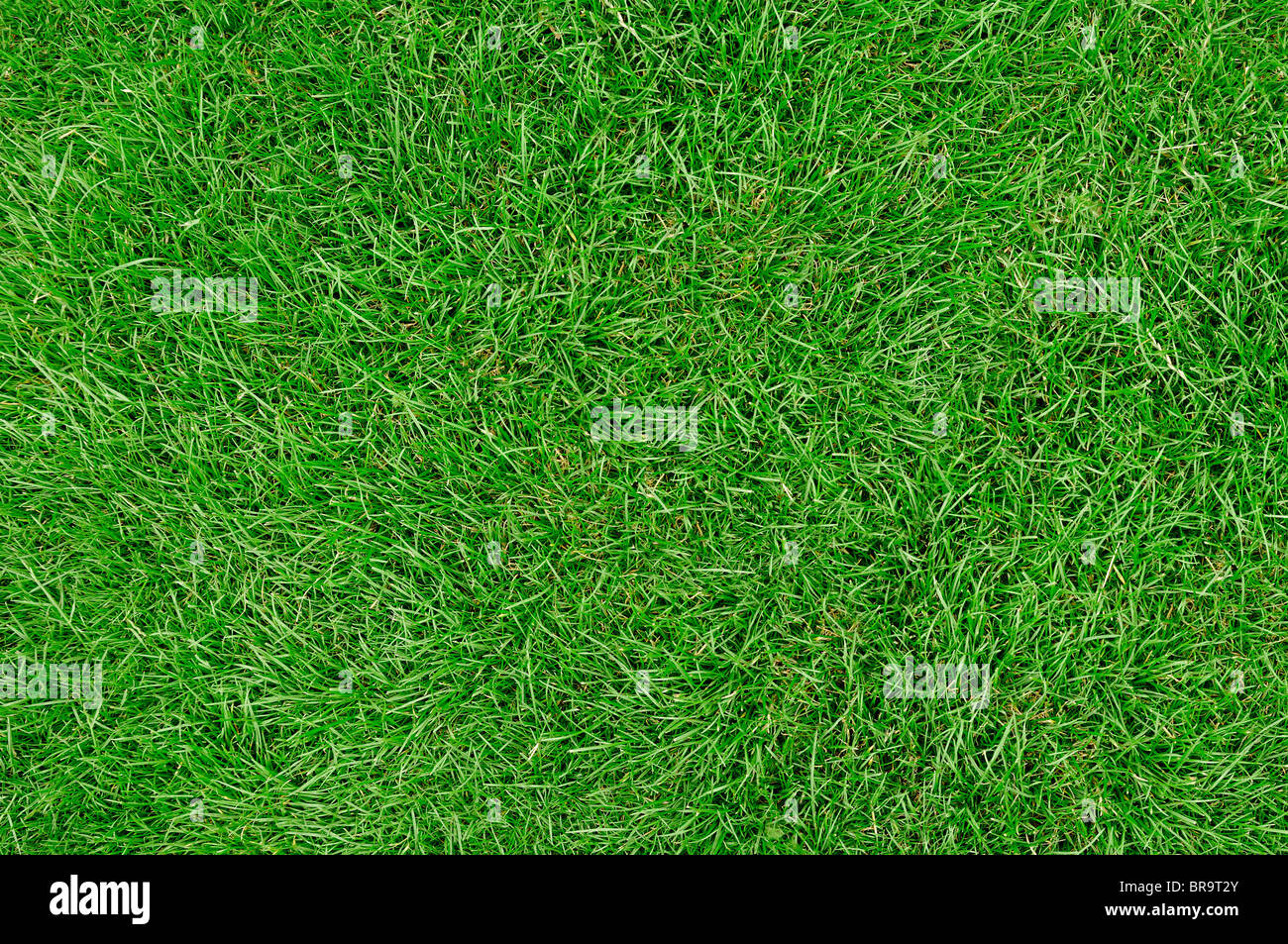 Grass Lawn, Close Up. - Stock Image