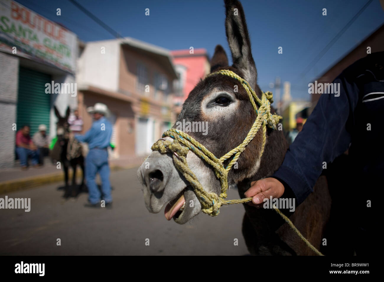 Participants wait with their donkeys at the 48th Annual Donkey Festival in Otumba Village Mexico - Stock Image