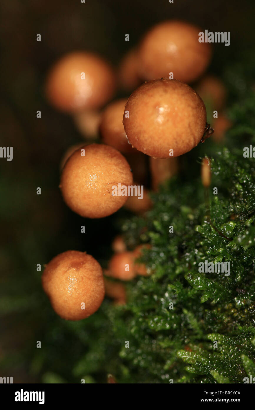 Fungus growing on a stump at Evje in Rygge, Norway - Stock Image