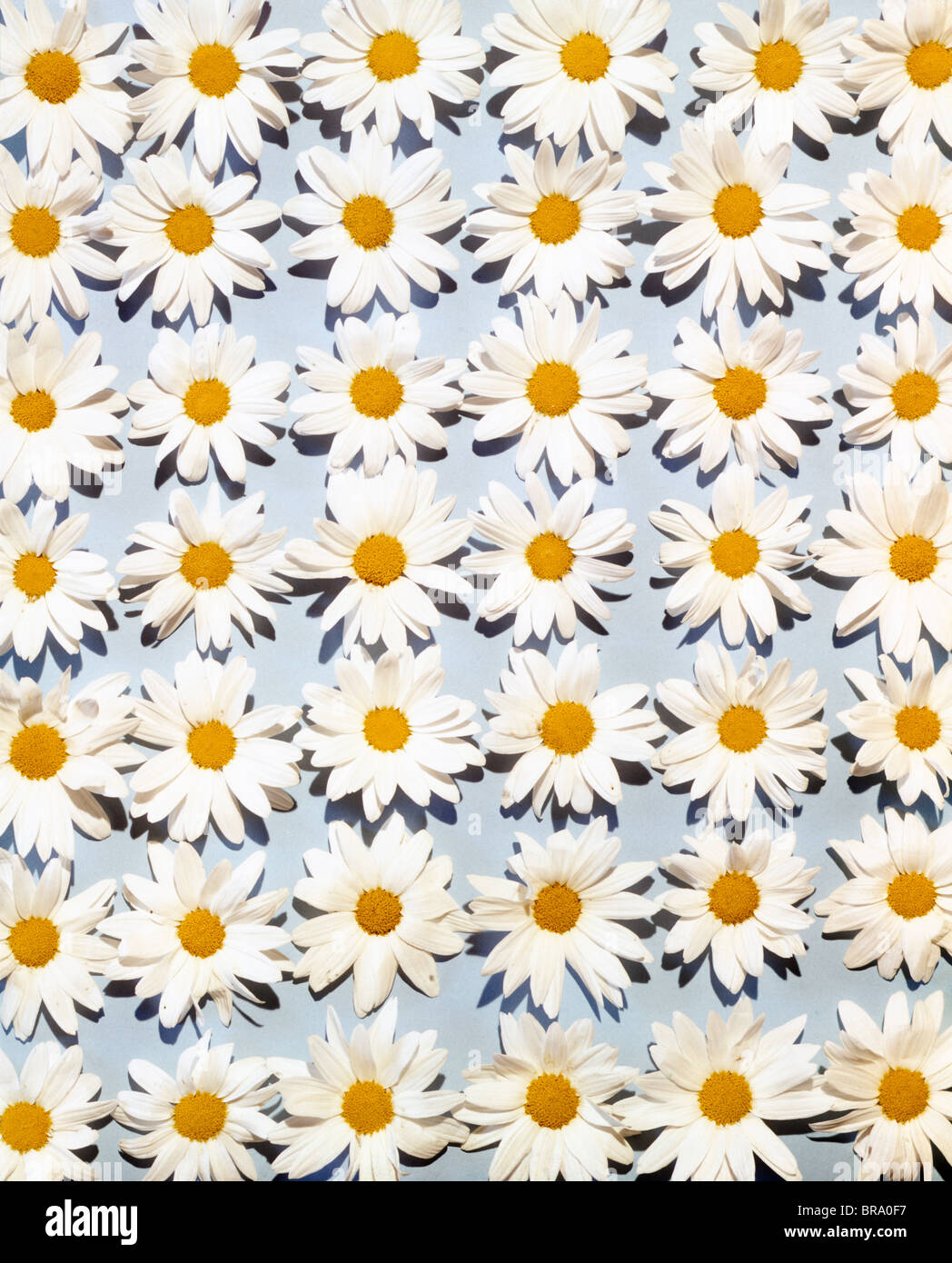 Repeated Pattern Yellow Flowers Stock Photos Repeated Pattern