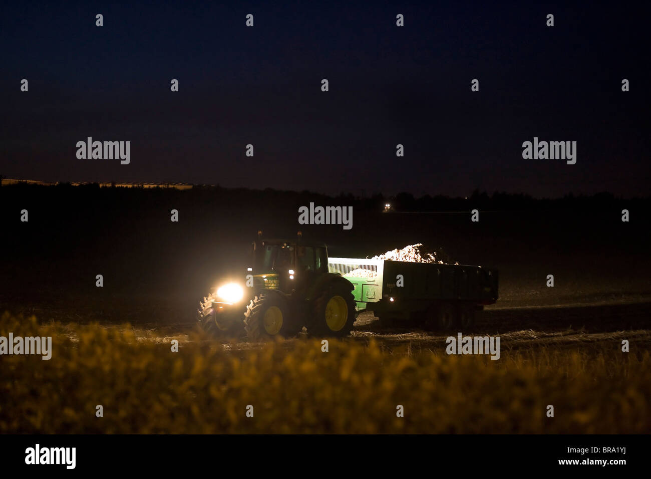 A farmer in Tamworth, Staffordshire, using his tractor during evening time to harvest crops during October before - Stock Image